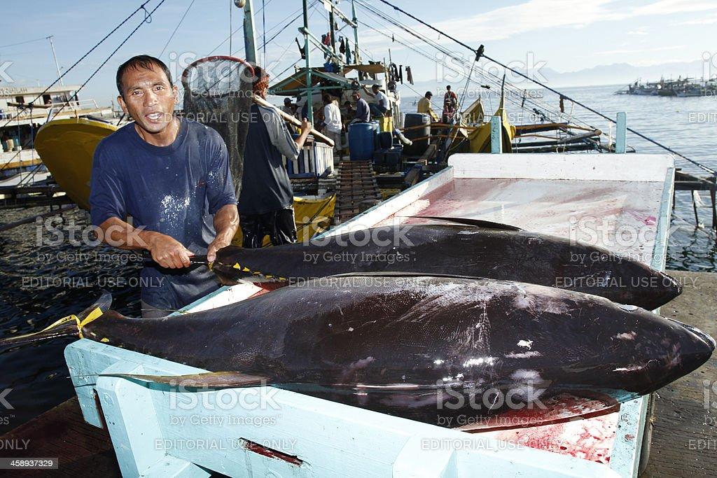 Loading Tuna into a Cart royalty-free stock photo