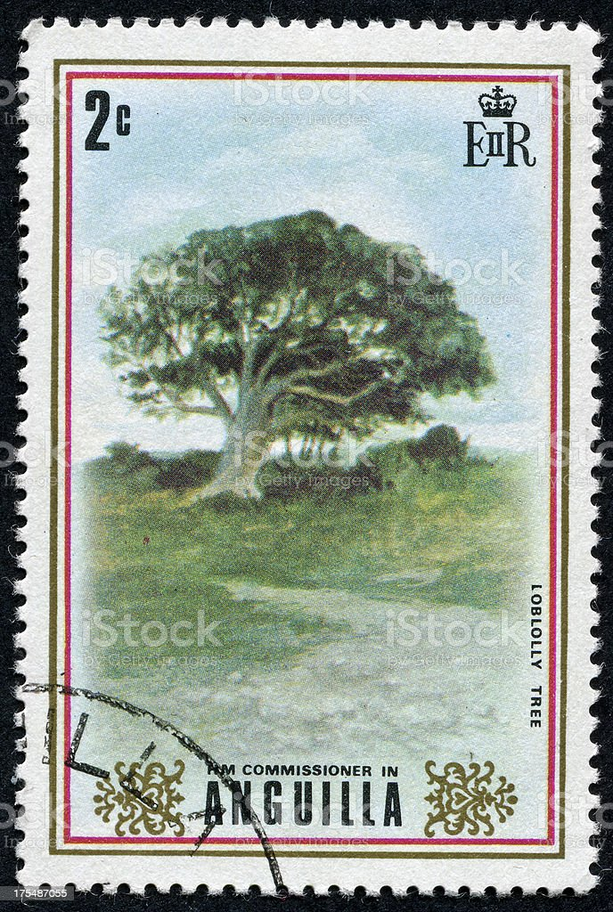 Loblolly Tree Stamp stock photo