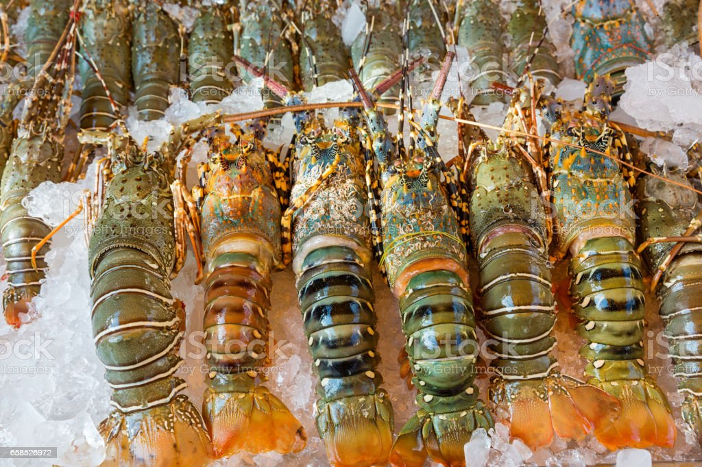 Lobster and seafood on ice stock photo