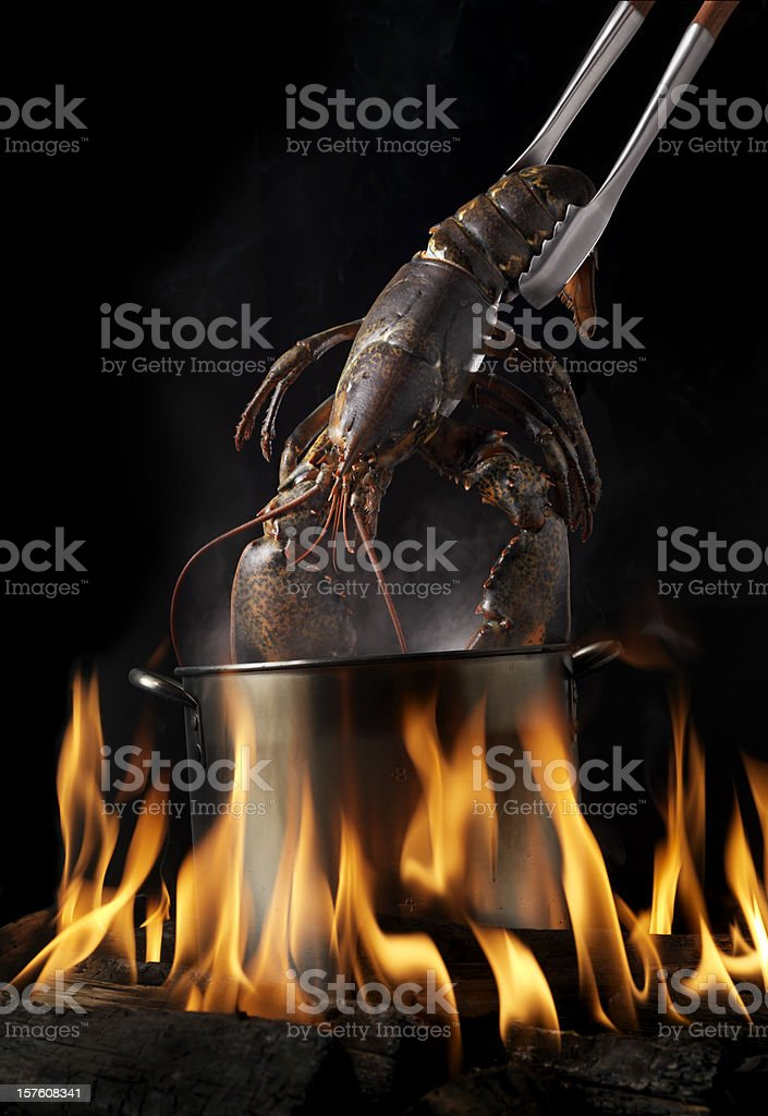 Lobster Boil royalty-free stock photo