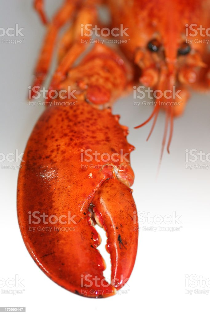 lobster claw royalty-free stock photo