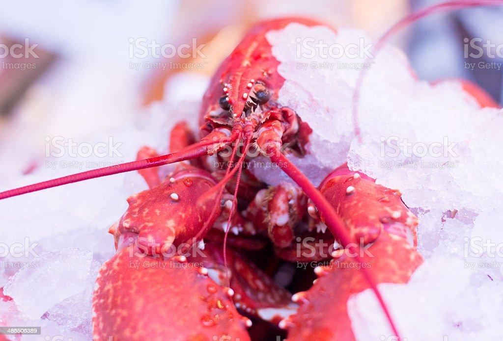 Lobster in Borough Market, London stock photo