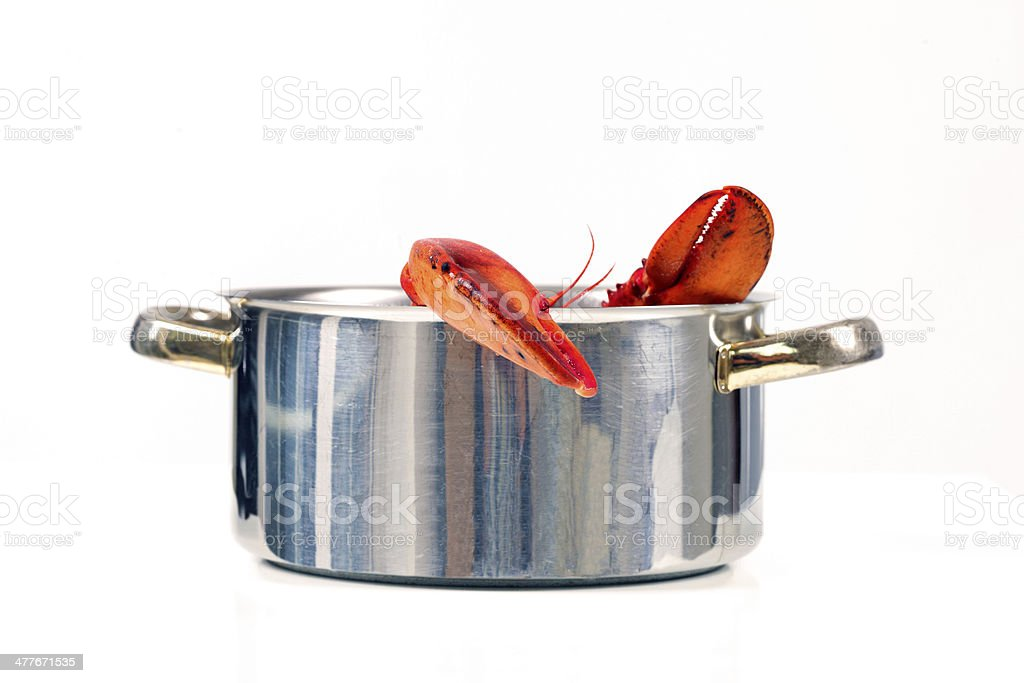 Lobster in Pot, Isolated on White stock photo
