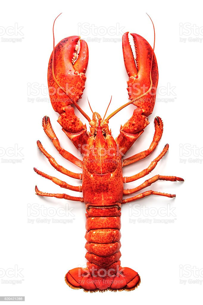 Lobster isolated on a white background stock photo