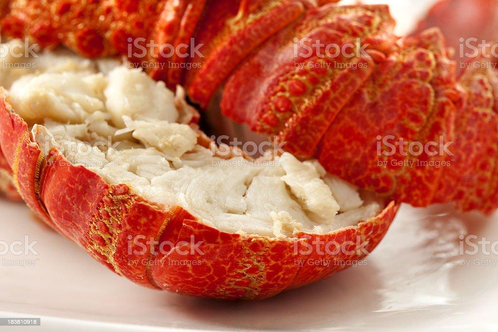 Lobster macro stock photo