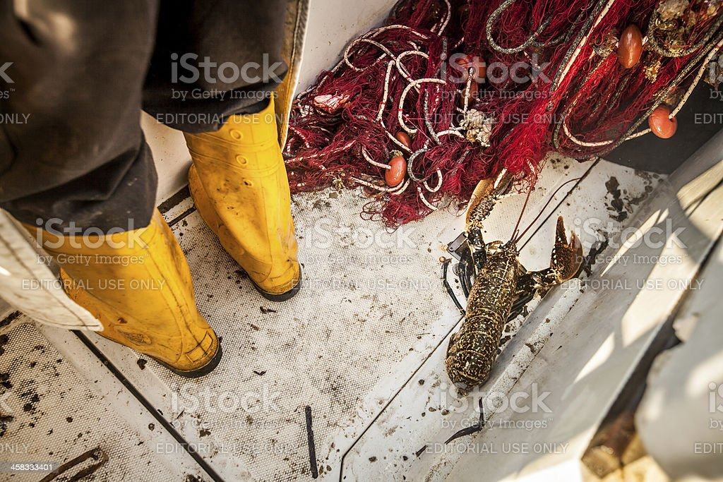 Lobster on Fishermen boat royalty-free stock photo