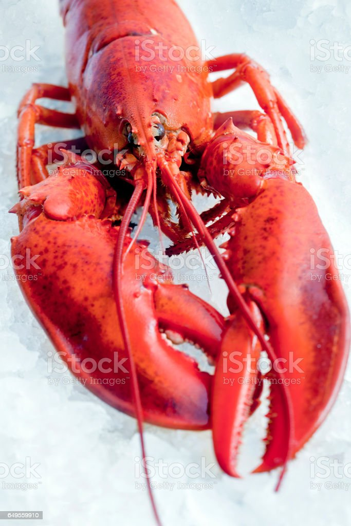 lobster on ice stock photo