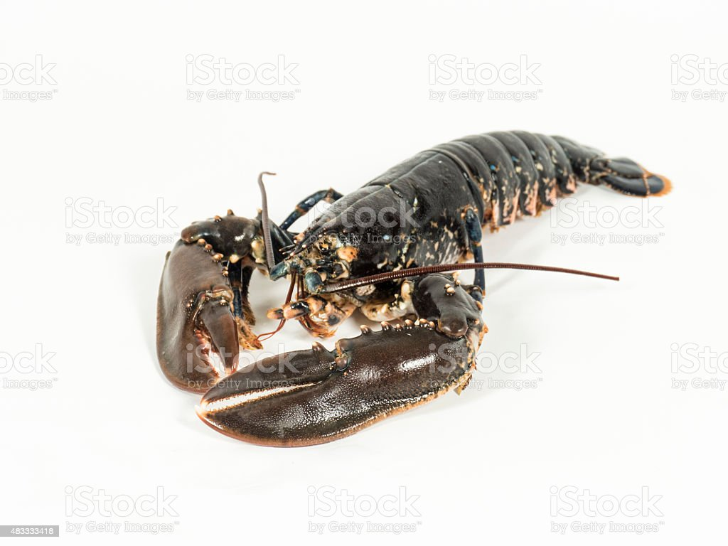 Lobster on white stock photo