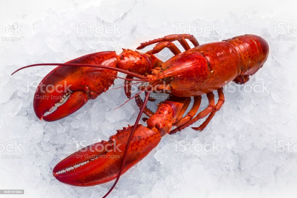 Lobster on wood, close up stock photo