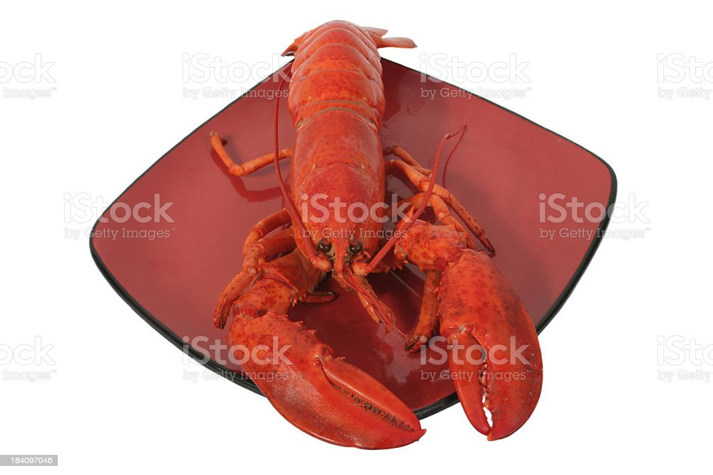 Lobster Steamed stock photo