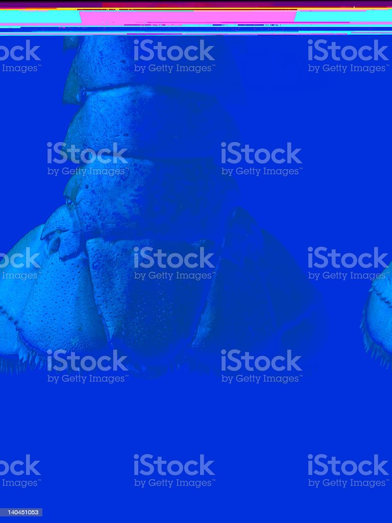 Lobster Tail - Isolated on Black stock photo