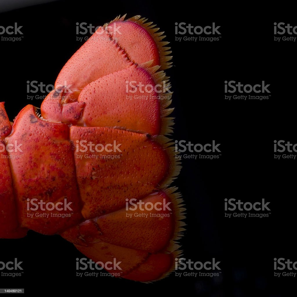 Lobster Tail Square stock photo
