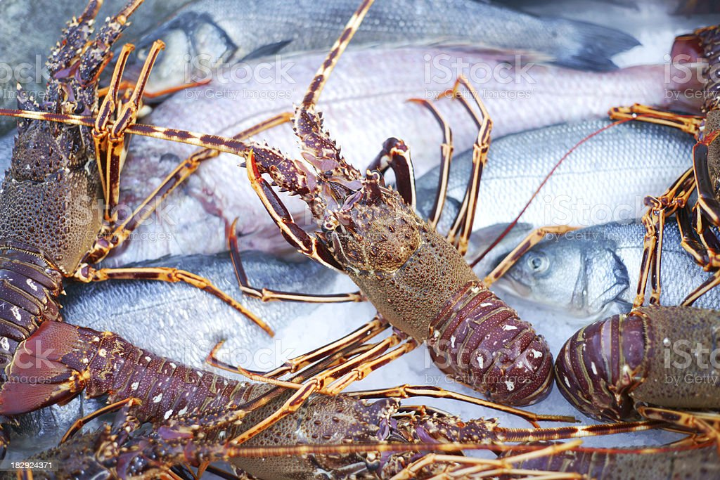 Lobsters and fishes stock photo