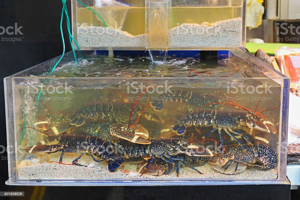 Lobsters in Tank stock photo