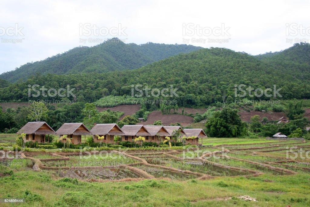 Local cottages and bungalows in rice paddies stock photo