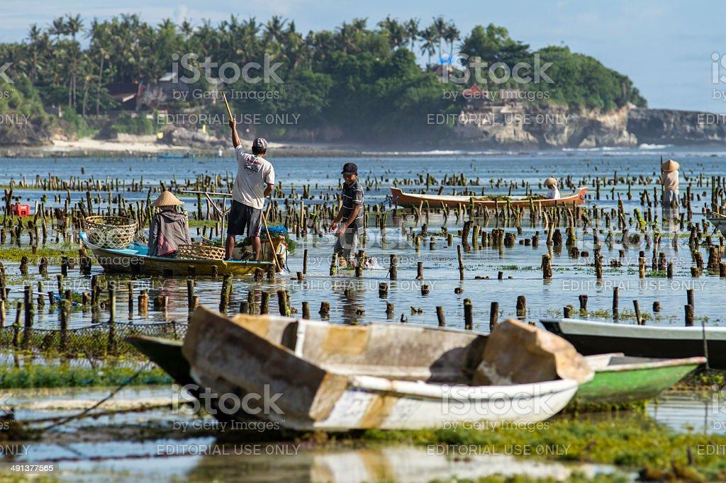 Local farmers in Bali stock photo
