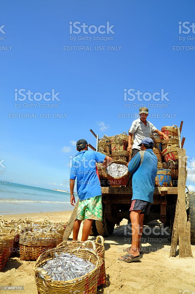 Local fishermen are uploading fisheries onto the truck stock photo