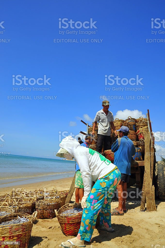 Local women are uploading fisheries onto the truck stock photo