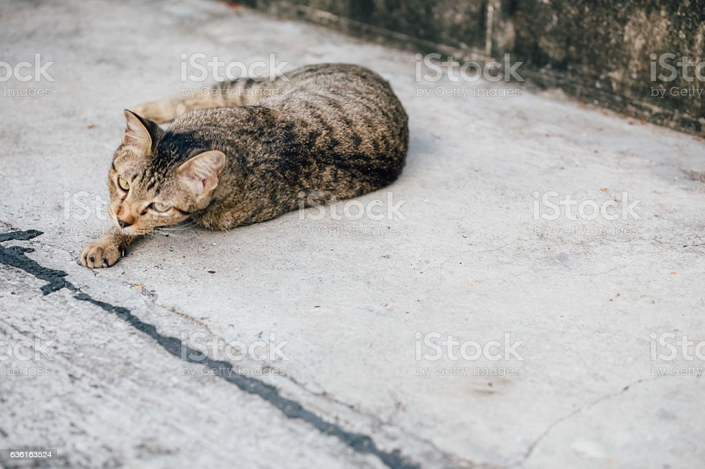 Local/Homeless/Abandon Cat in the village stock photo