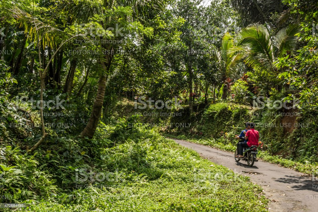Locals riding a moped near rice fields in Bali stock photo