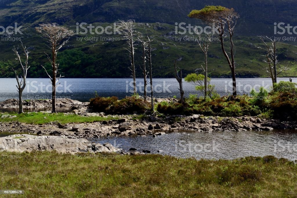 Loch Assynt and Scots Pine stock photo