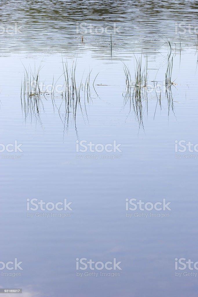 Loch Grass royalty-free stock photo