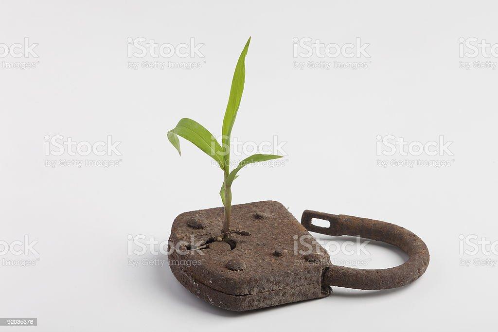 lock plant stock photo