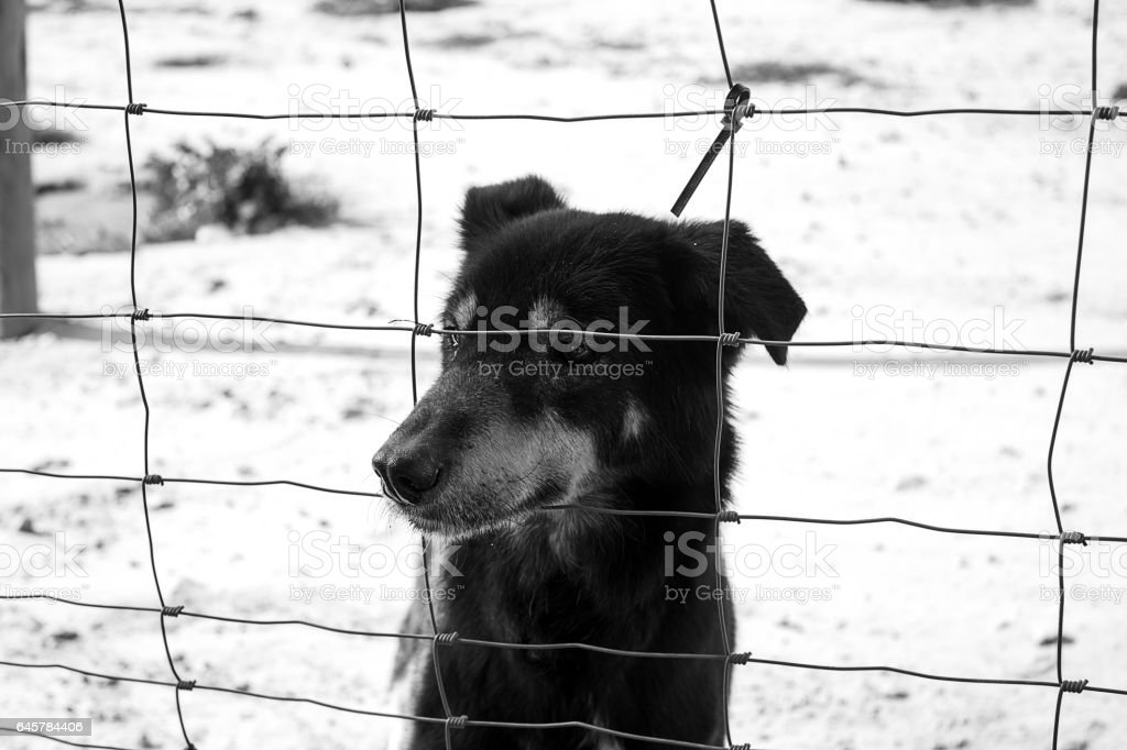 Locked kennel dogs abandoned, sadness stock photo