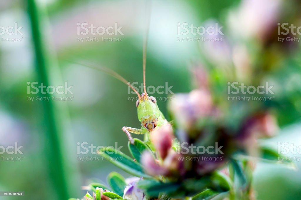 locust stock photo