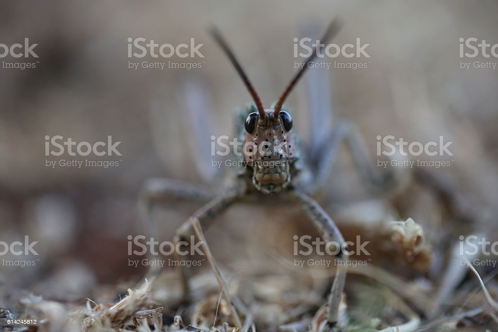 Locust stock photo