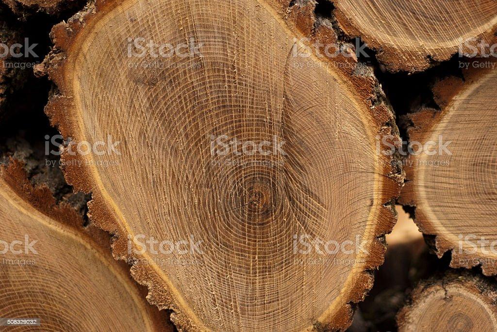 Locust Tree Growth Rings stock photo