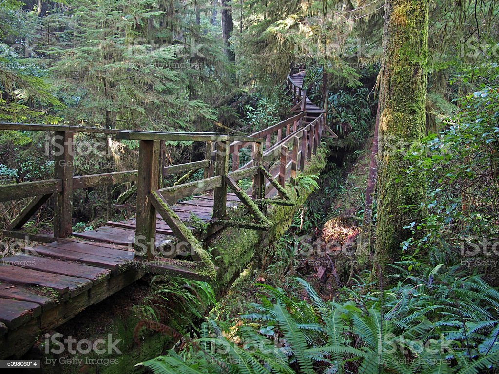 Log Bridge Over a Creek Near Tofino, Canada stock photo