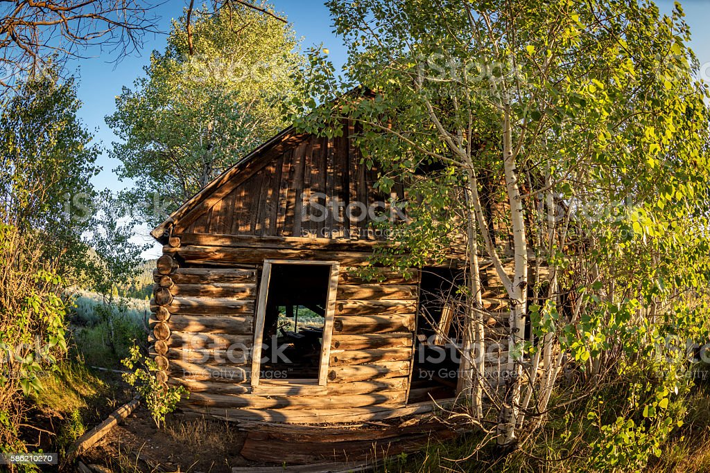 Log cabin overgrown with too many trees stock photo