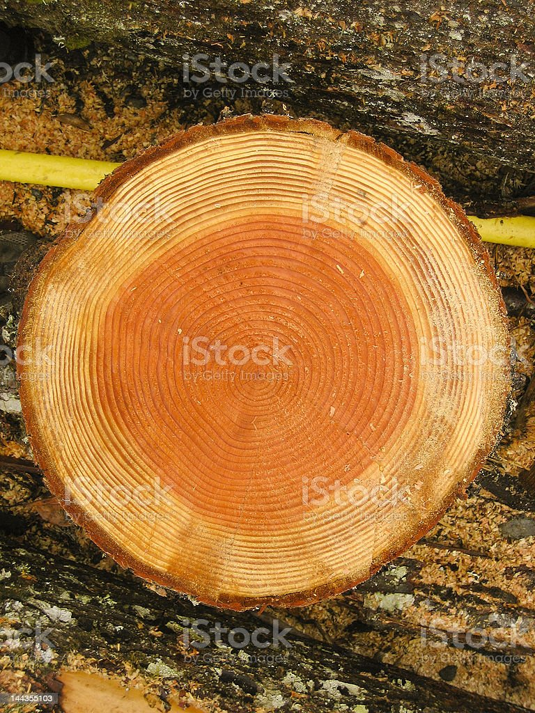 Log cross section royalty-free stock photo
