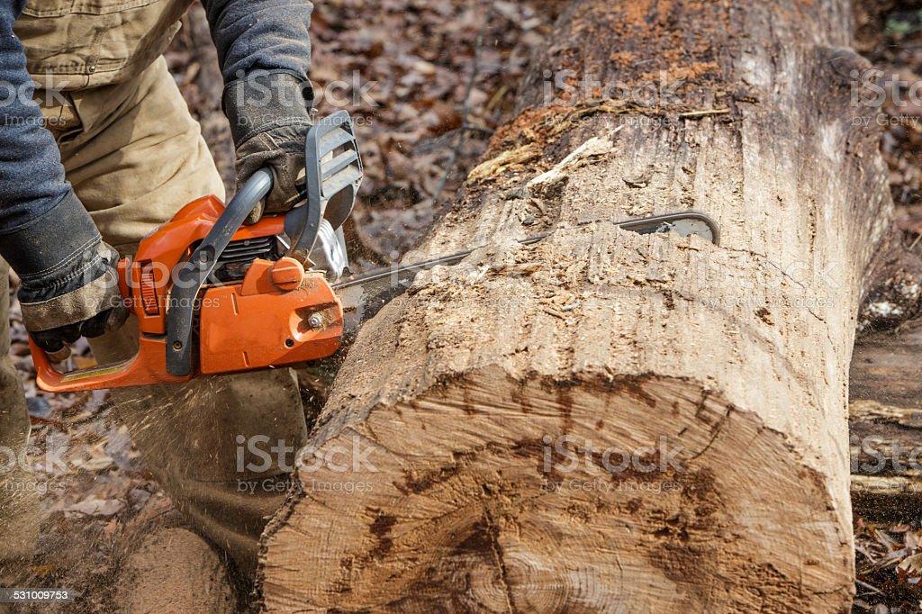 Log Cutting stock photo