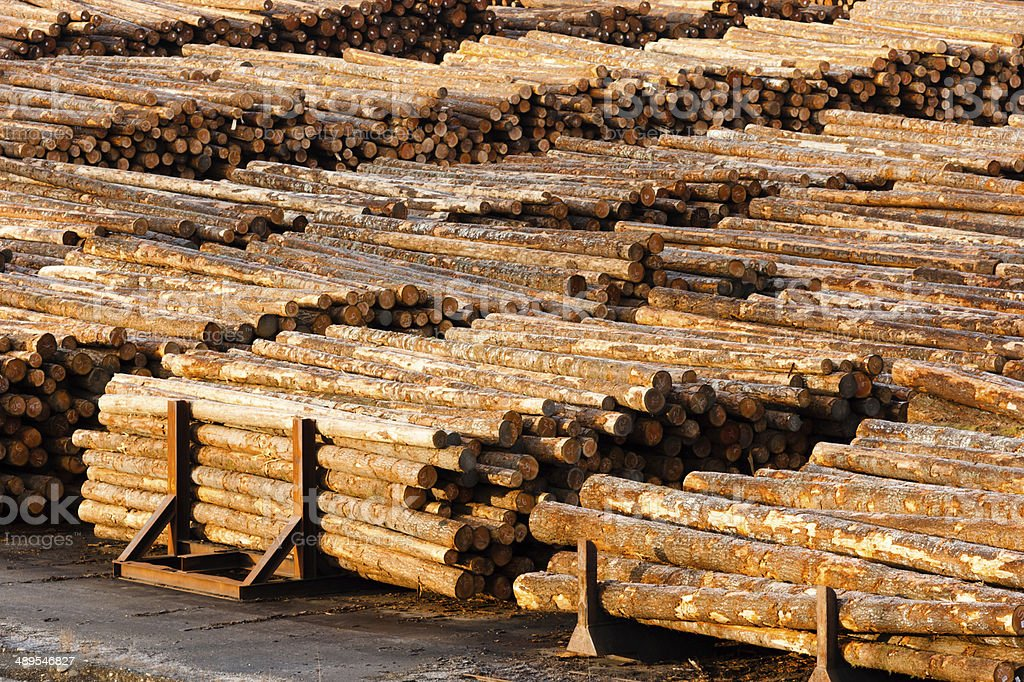 Log Ends Wood Rounds Cut Measured Tree Trunks Lumber Mill stock photo