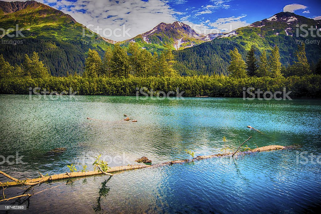 A log floats off the Kenai Peninsula in Alaska. stock photo