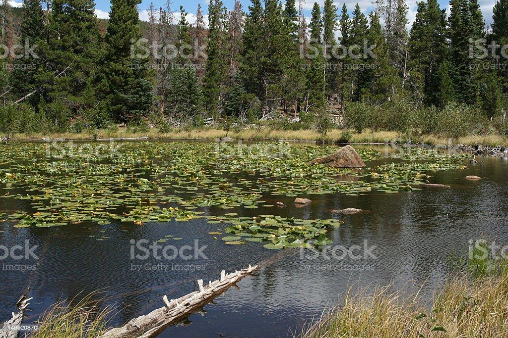 log in lake stock photo