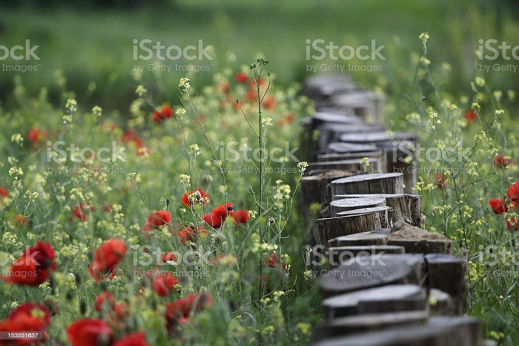 Log in poppy stock photo
