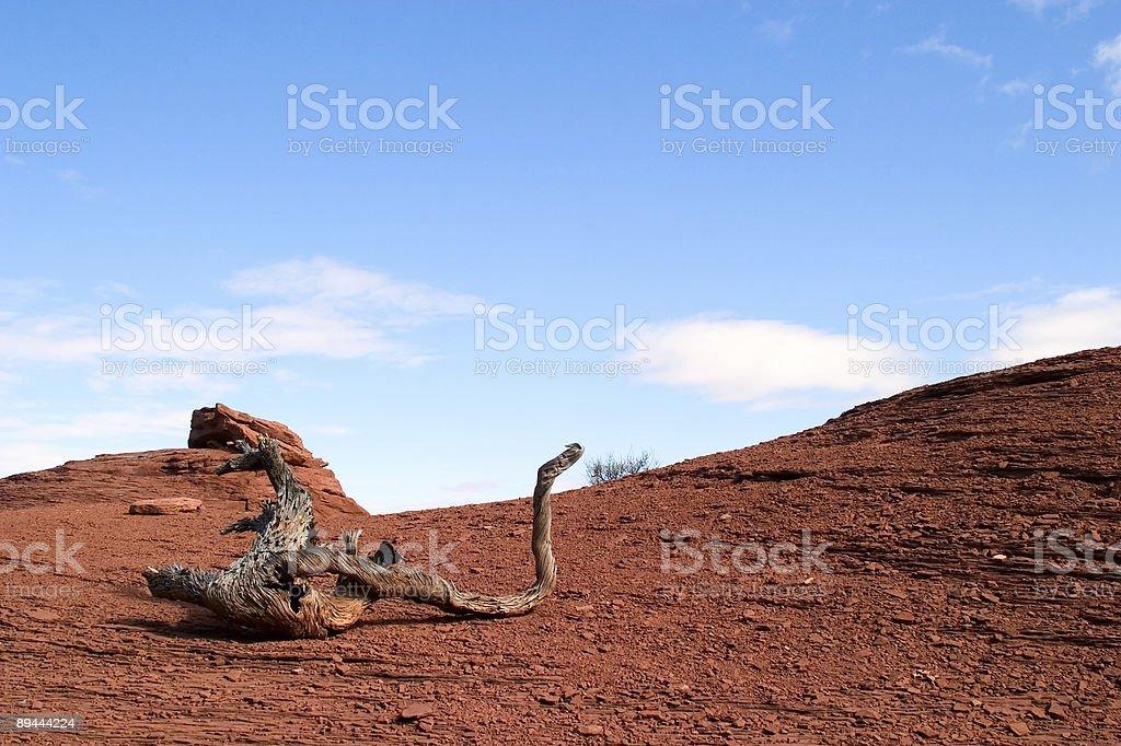 Log in the Desert 2 stock photo