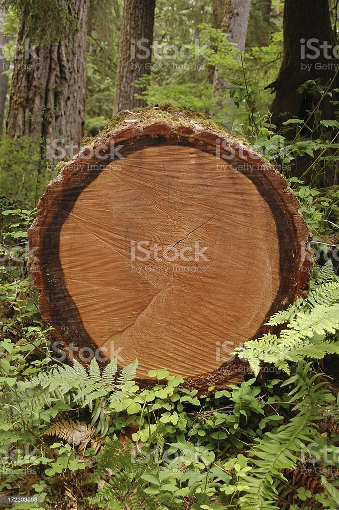 Log in the forest royalty-free stock photo