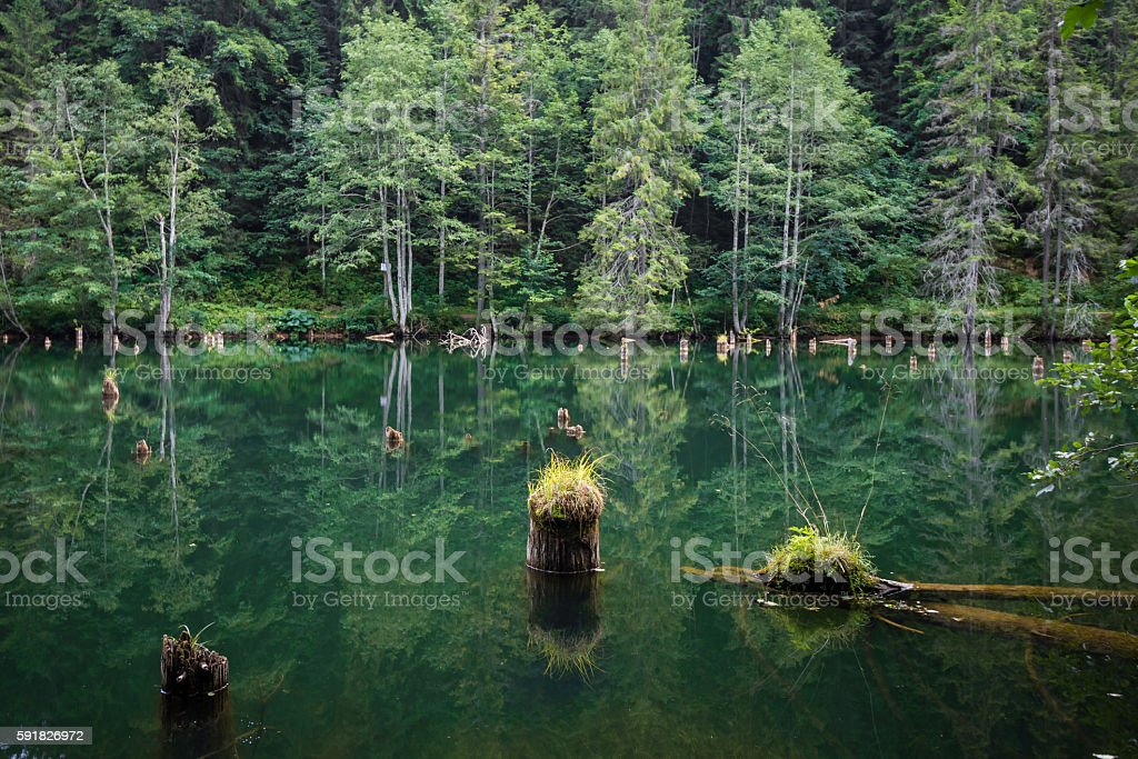 log in water stock photo