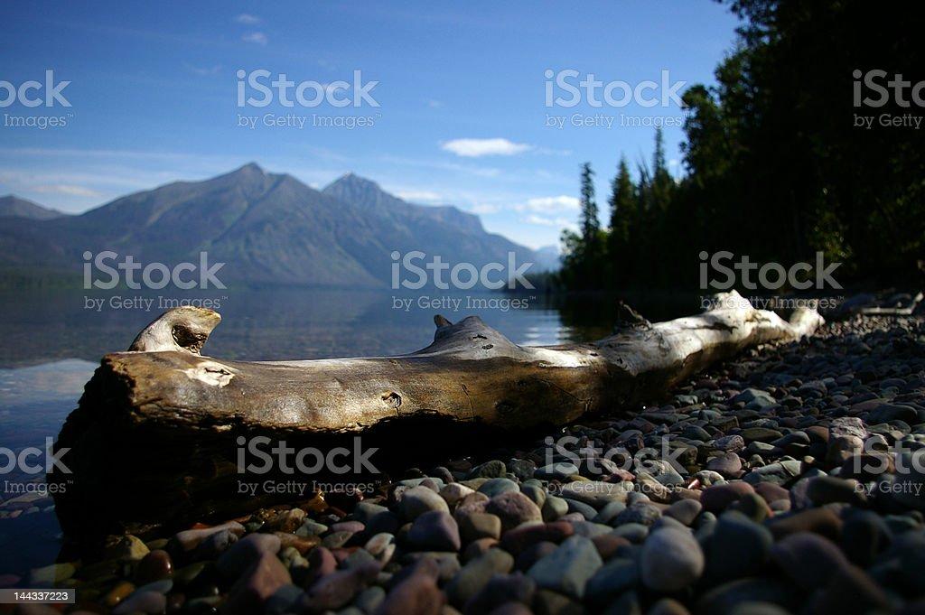 Log on Lake McDonald royalty-free stock photo