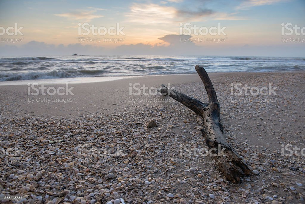 log on the beach stock photo