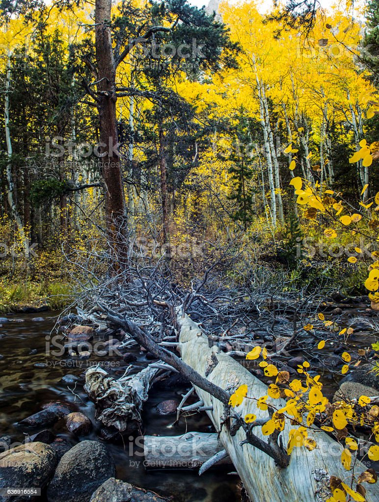 Log over water in fall stock photo