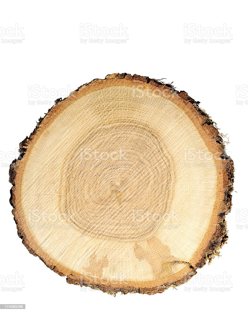 Log stock photo
