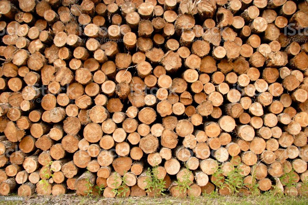 Log Pile stock photo