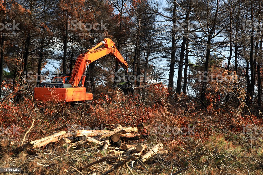 Log Processor stock photo