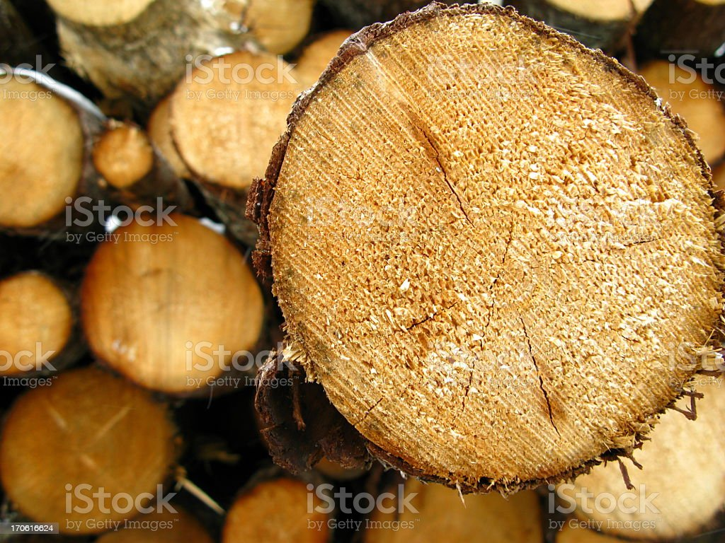 Log protruding from pile royalty-free stock photo