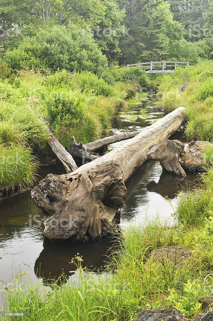Log rests in creek with a bridge royalty-free stock photo